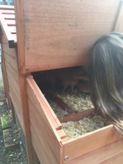 My cousin showing me her chickens